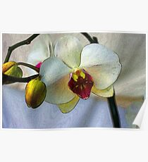 Shining Orchid  Poster