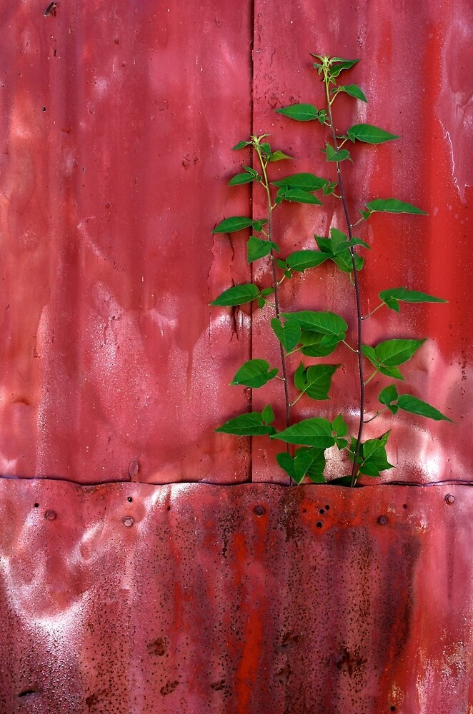 Nature Wins by Jessica Dzupina
