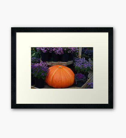 Pumpkin with Purple Framed Print
