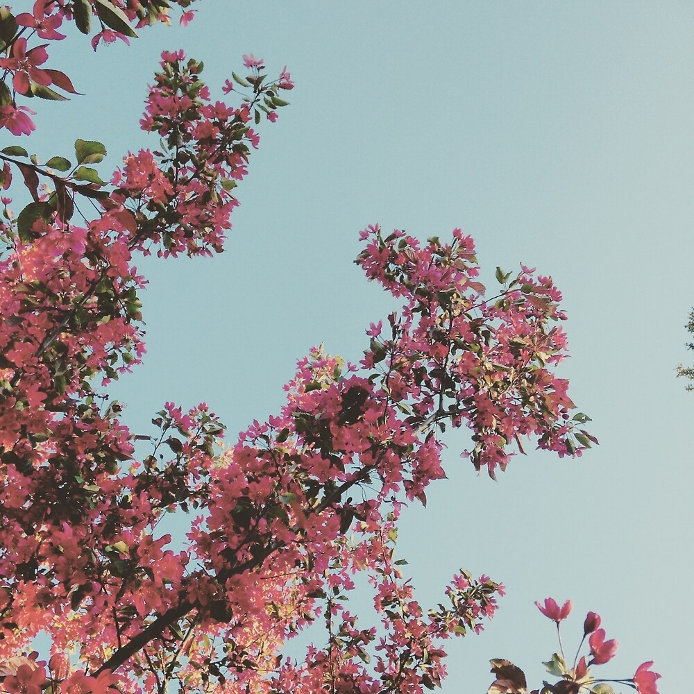 Pink Flowers by kyliedegrote