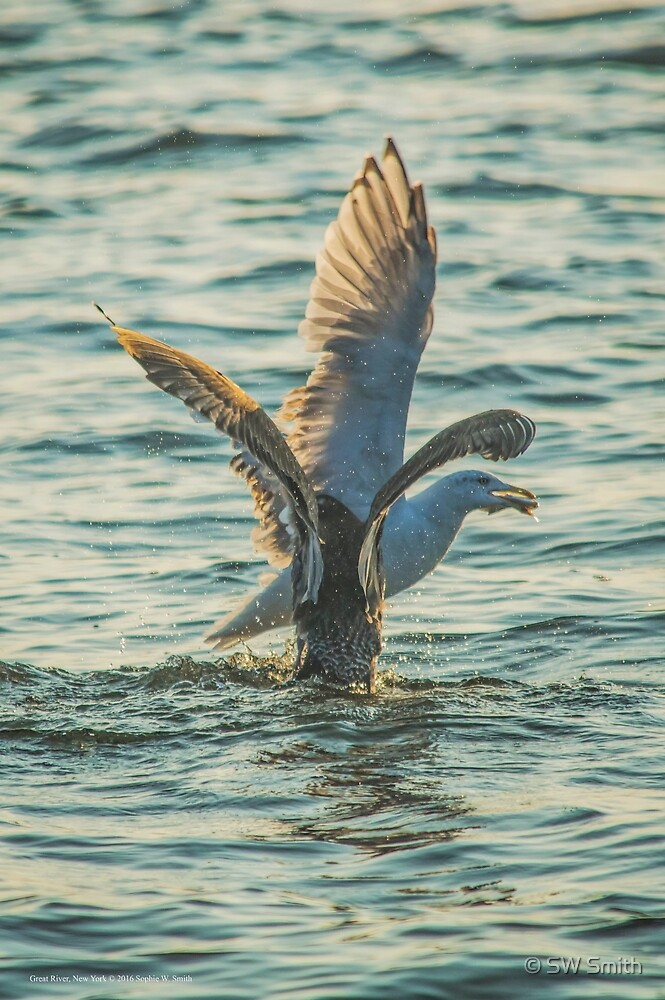 Two Seagulls Fighting Over Fish | Great River, New York by © Sophie W. Smith