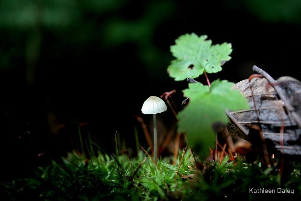 A Little Spotlight Please by Kathleen Daley