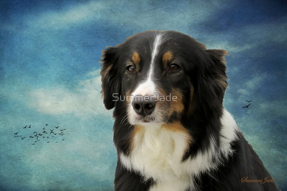 Australian Shepard ~ Her Poker Face by SummerJade