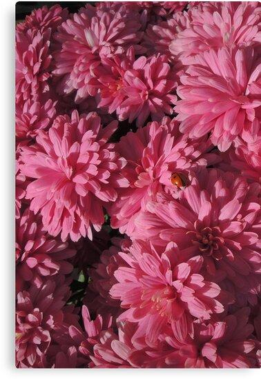Spot the ladybird by Heather Thorsen