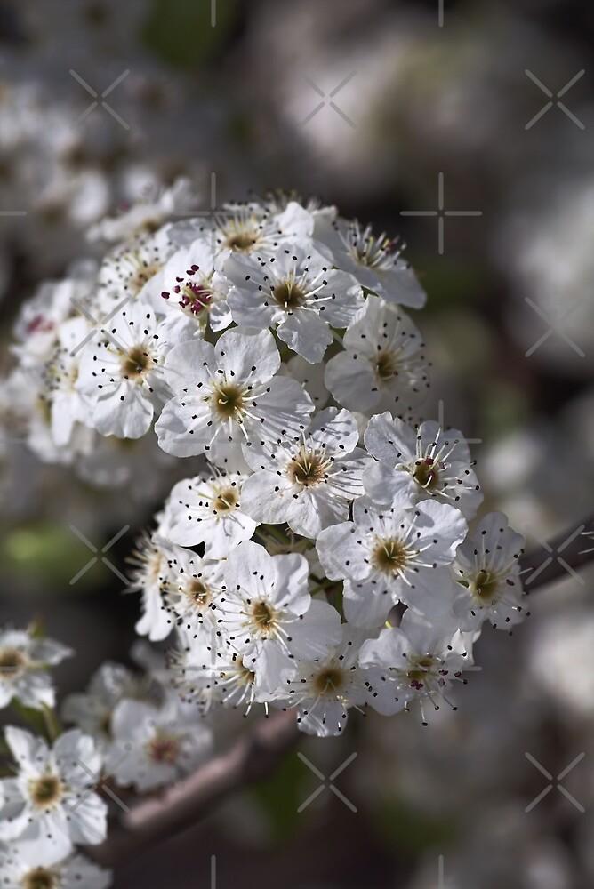 Displaying Spring by Joy Watson