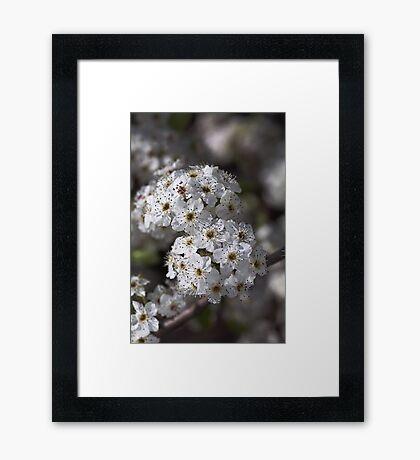 Displaying Spring Framed Print