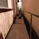 Alley Cat by abryant