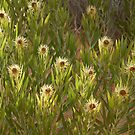 Desert Flowers by clizzio
