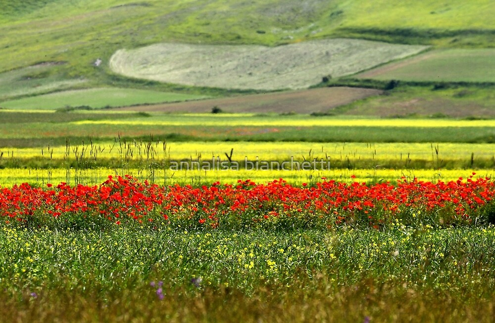 Fields and flowers by annalisa bianchetti