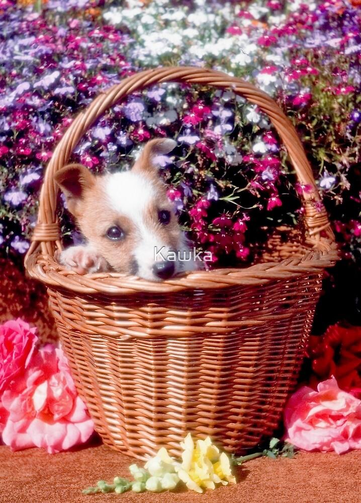 Jack in the basket by Kawka