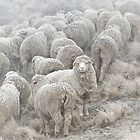 Frosty Sheep by focuscreative