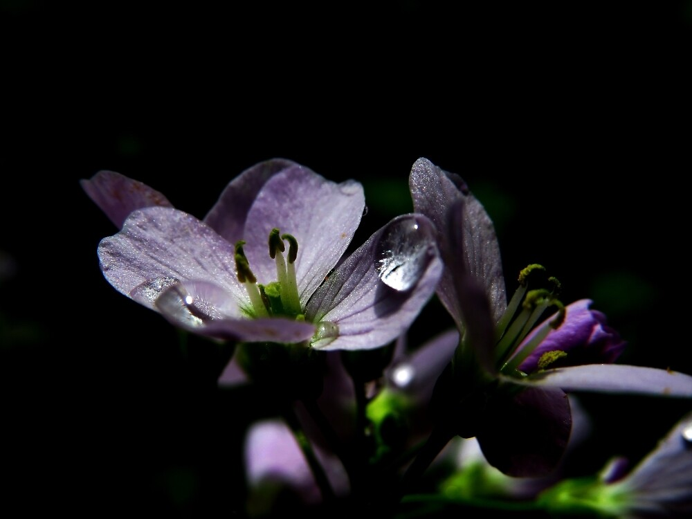 Flower and droplets by Theea