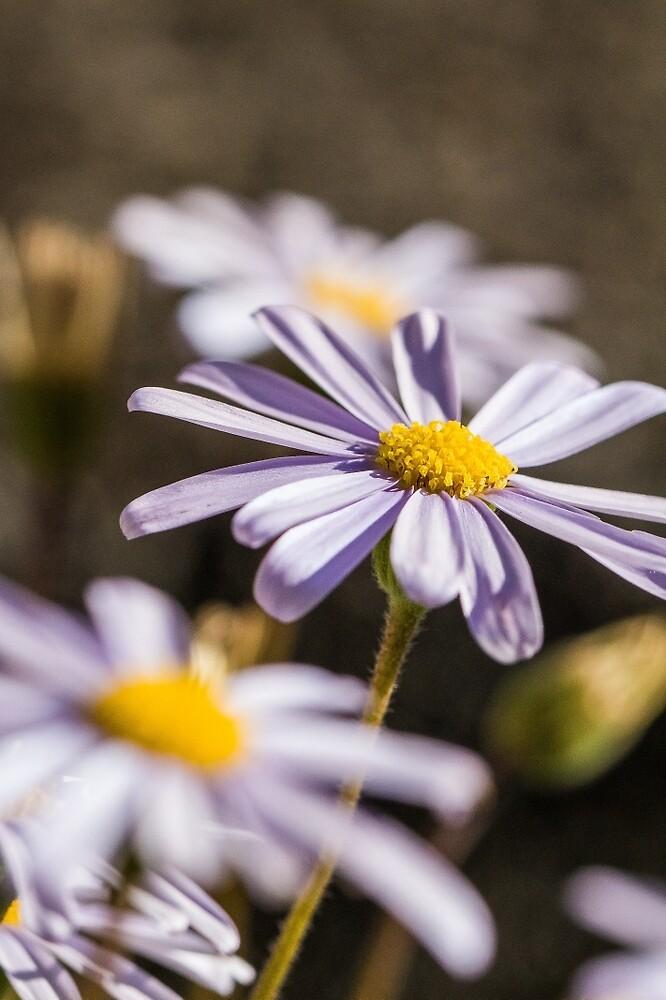 Flowers  by Jaicamak