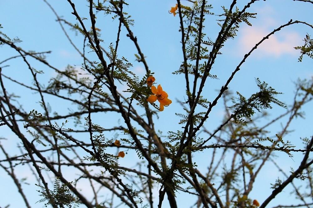 Twigs by DanielaEmbrack