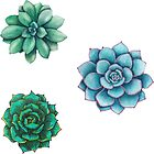 Succulent Drawings  by authenticity