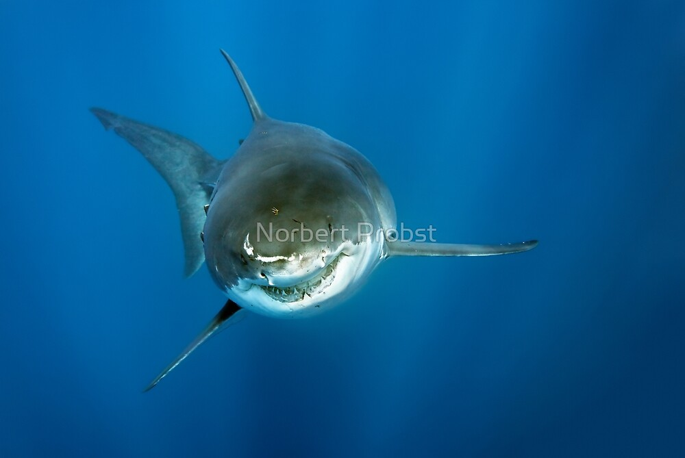 Smiley by Norbert Probst
