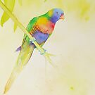 Rainbow Lorikeet by Ray Shuell