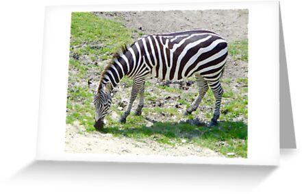Zebra by shopismo