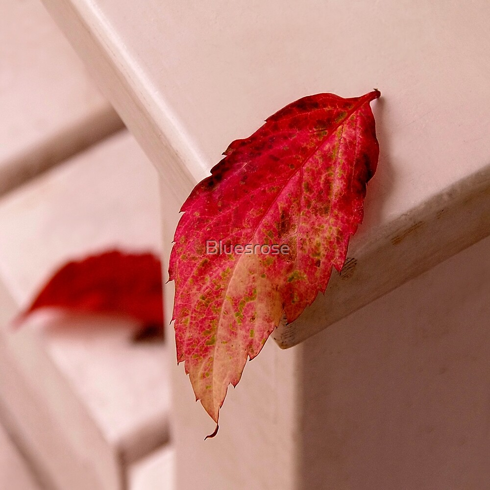 Red leaves by Bluesrose