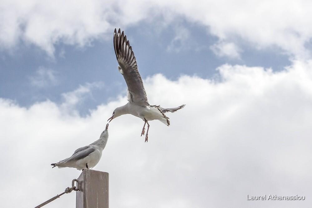 Seagulls - Kiss, Kiss by Laurel Athanassiou