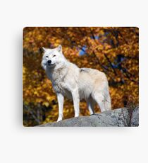 Loup Arctique Canvas Print