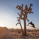 Joshua Tree  by ediphotoeye