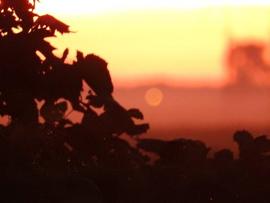 Grape Vines at Dusk by sagespirit