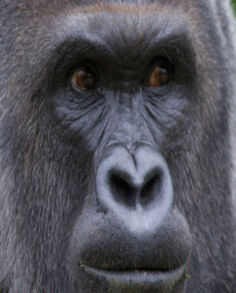HARAMBE CLOSE UP by HarambeShirt