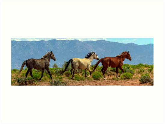 Grey, White and Chestnut Horse Panorama View by Bo Insogna
