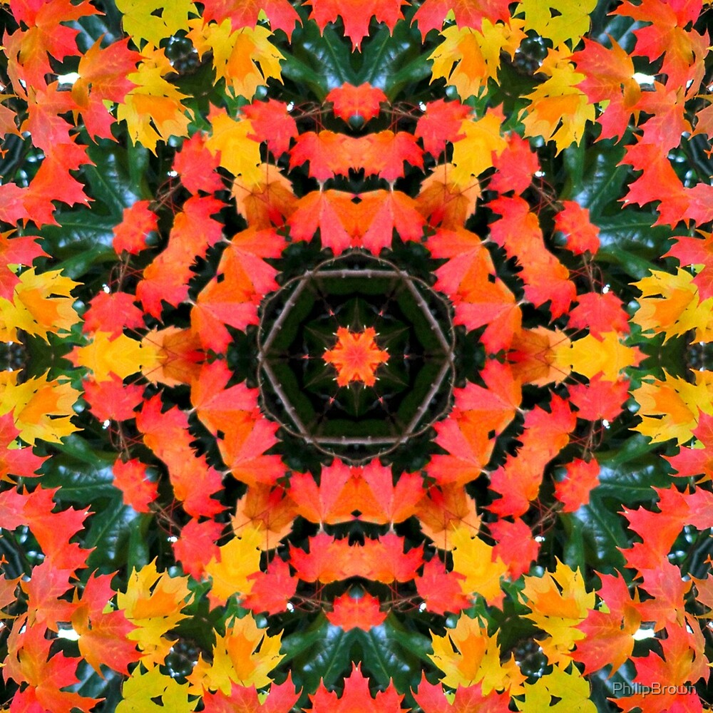Fall Leaves Kaleidoscope  by PhilipBrown