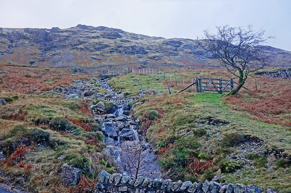 Where's Emily Bronte? by Harry Oldmeadow