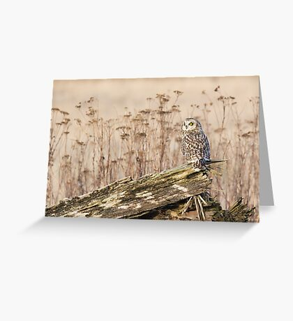 Short-eared Owl in Natural Sepia Greeting Card
