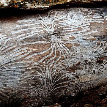 Bug Lines in Bark by Kaitbrooks35