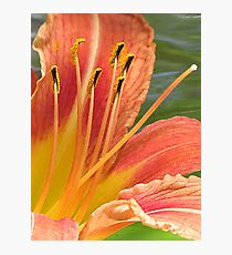 Offered In An Airy Breeze Photographic Print