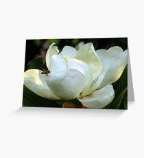 Magnolie Grandiflora Grußkarte