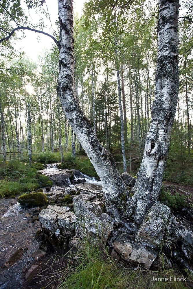 Twin Birch Tree by Janne Flinck
