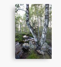 Twin Birch Tree Metal Print