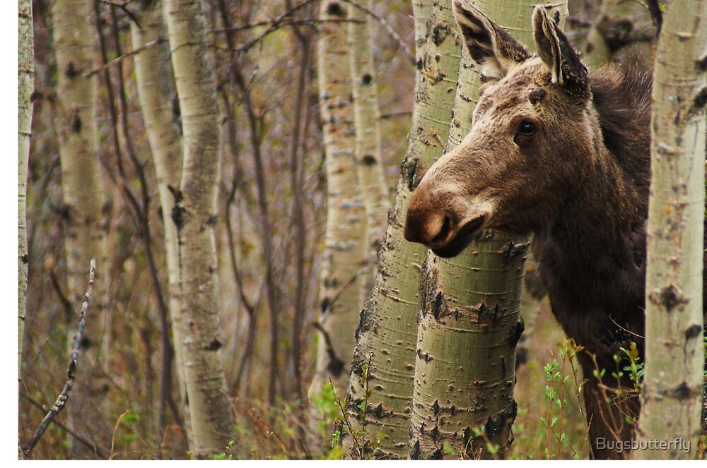 Elliott the Curious Moose by Bugsbutterfly