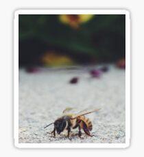 Bee Life Sticker