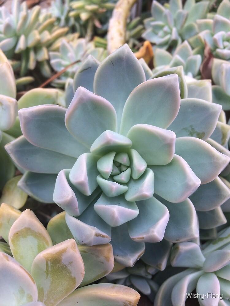 Succulent by Wishy-Fishy