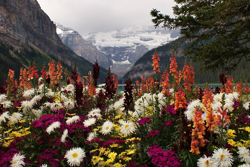 Lake Louise Alberta by Bugsbutterfly