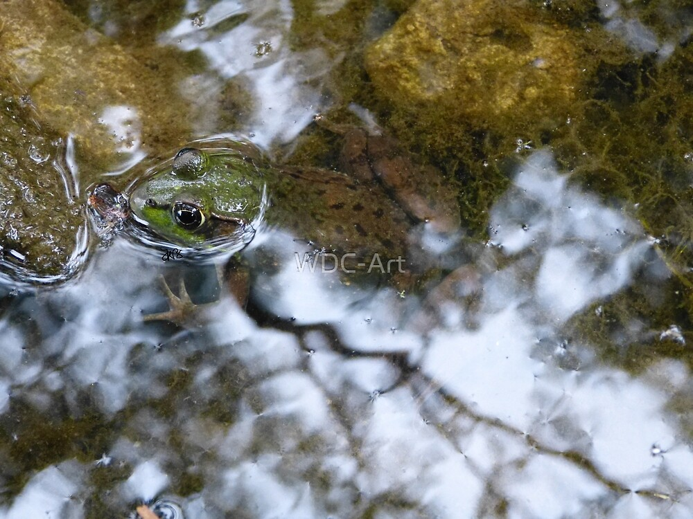 Frog by WDC-Art