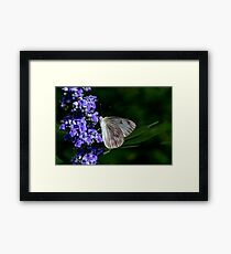 Butterfly Feeding Framed Print
