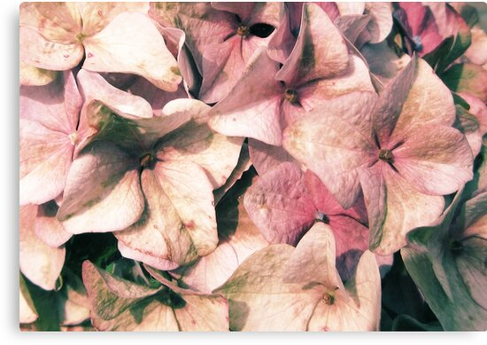 Powder Pink is Beautiful by MaureenAstrid