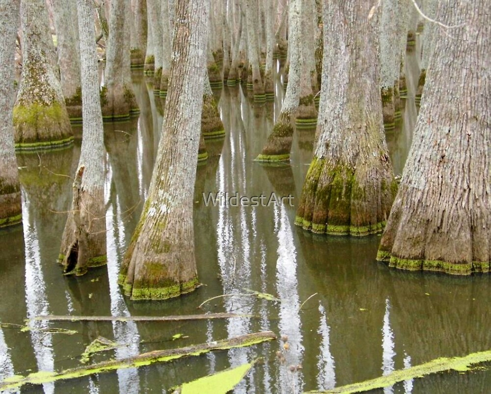 Bizarre Cypress by WildestArt