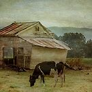 The Old Cow Shed by Clare Colins