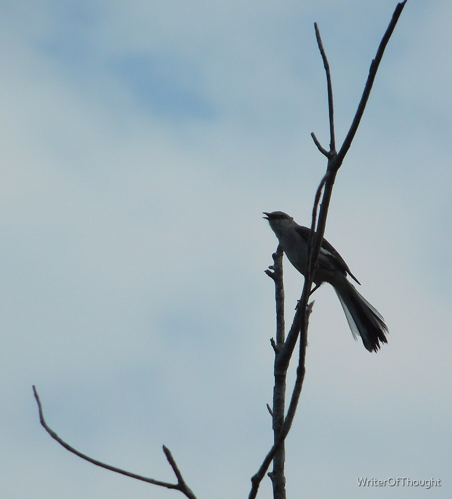 Mockingbird on a branch by WriterOfThought
