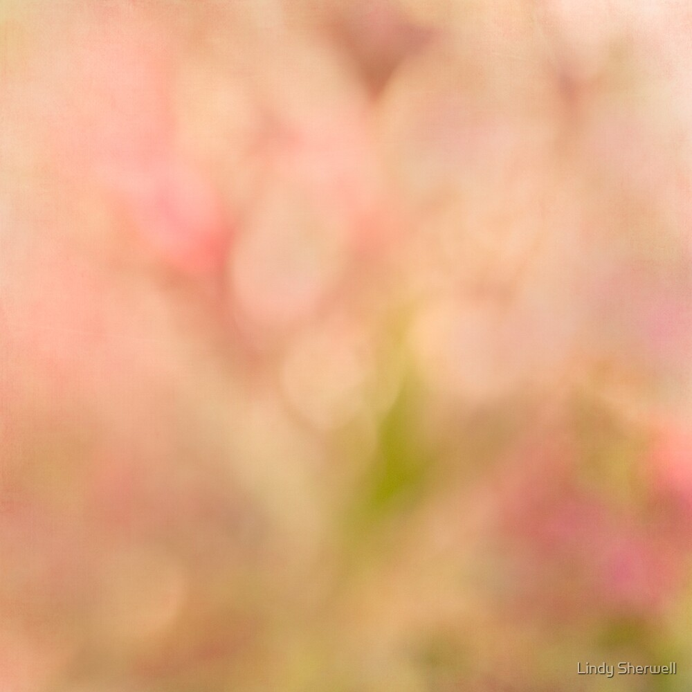 Peach Fuzz by Lindy Sherwell