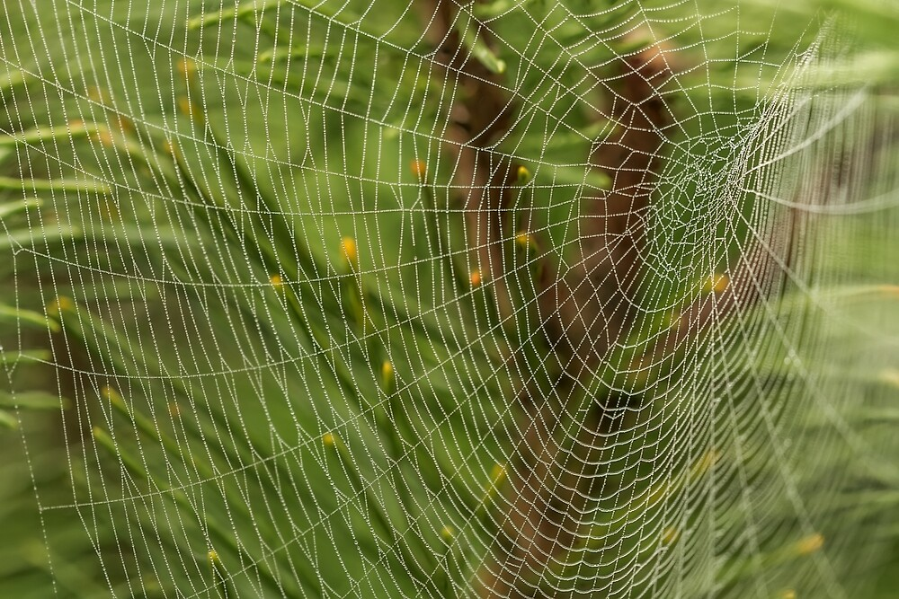 Large web in autumn by Geraldas Galinauskas