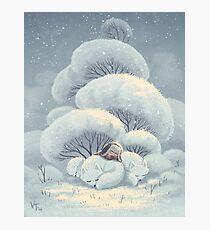 Arctic Fox Huddle Photographic Print